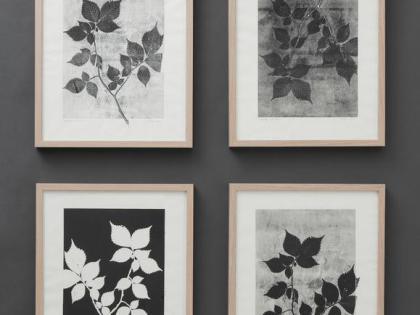Les gravures botaniques de Pernille Folcarelli
